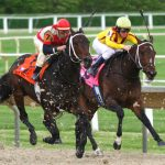 The Nuances Of Horse Racing Betting Systems